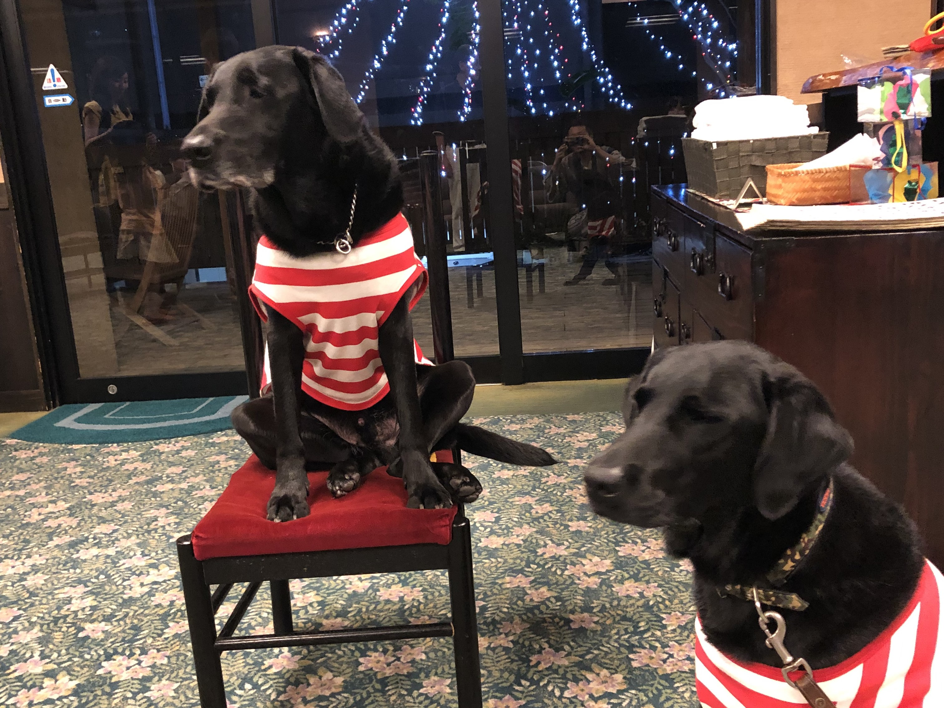 別府鉄輪温泉葉山のマジック犬「ハルクとエルマ」元盲導犬見習いによるマジックショー